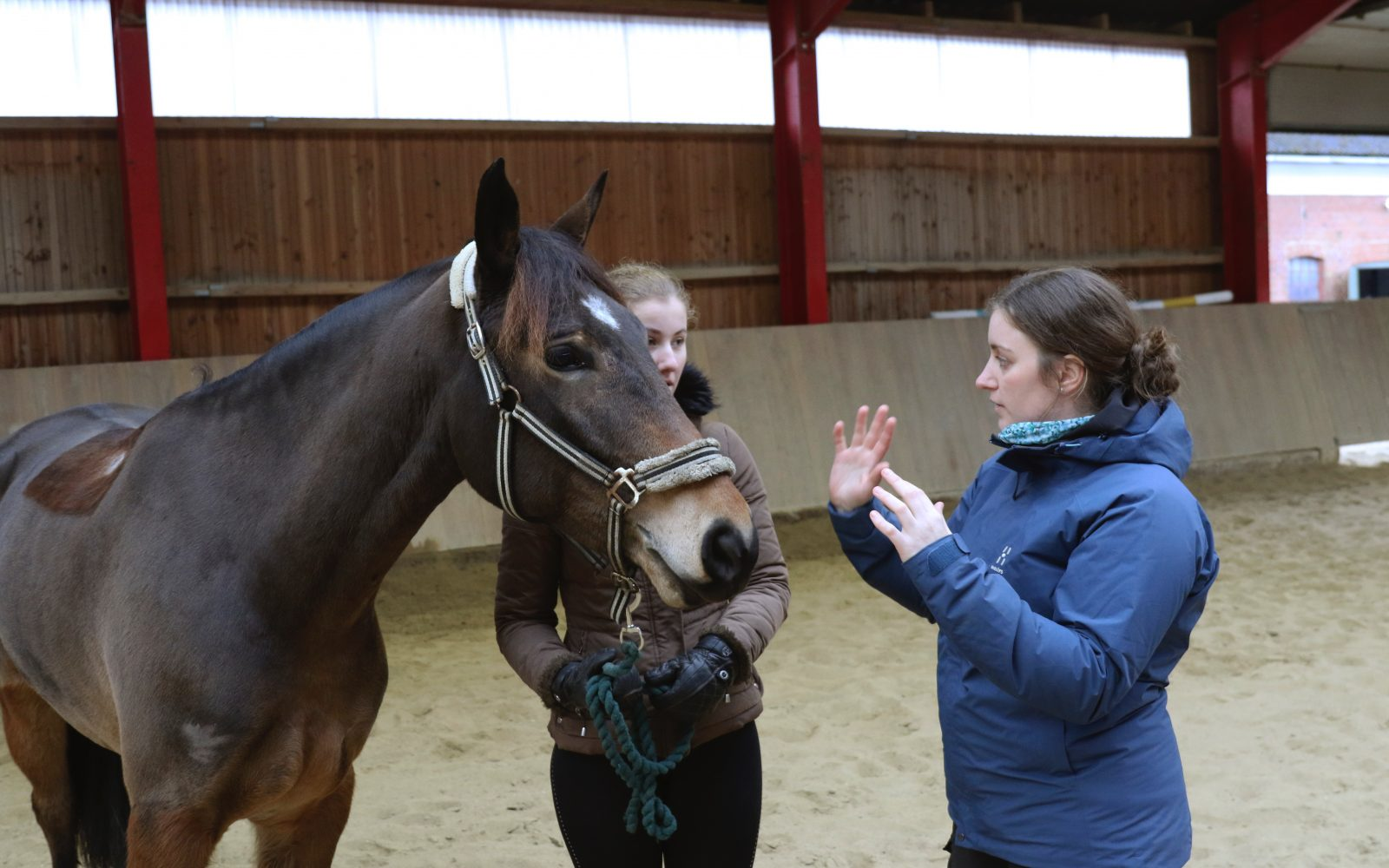 Hestefysioterapeut Jennie Bundegaard fortæller en kunden om en hests problematikker
